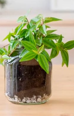 Up-cycle Jar with Plant | Nutella